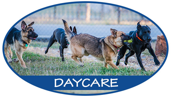 button-daycare