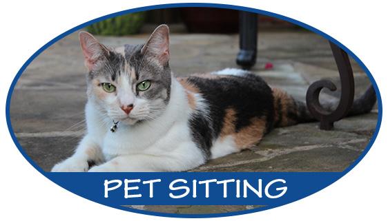 button-pet-sitting