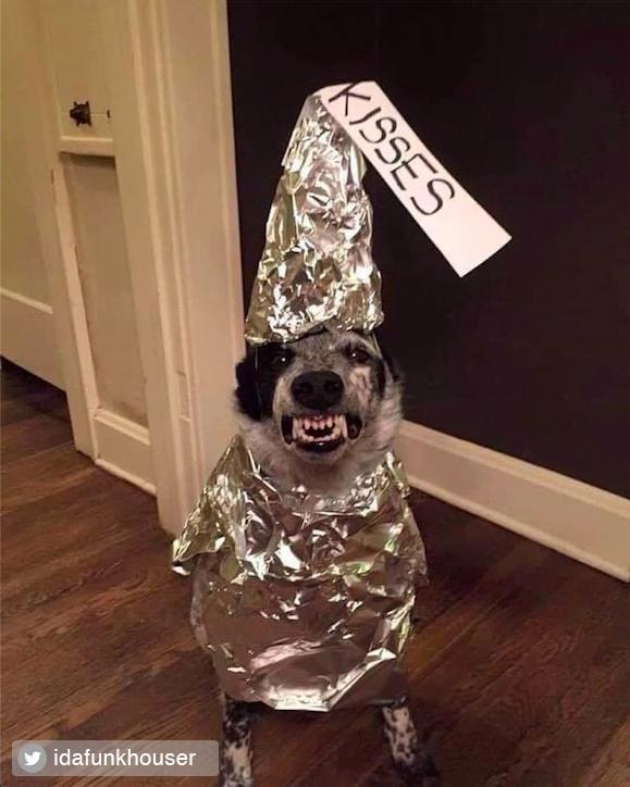 Credited Dog Halloween Costume 1