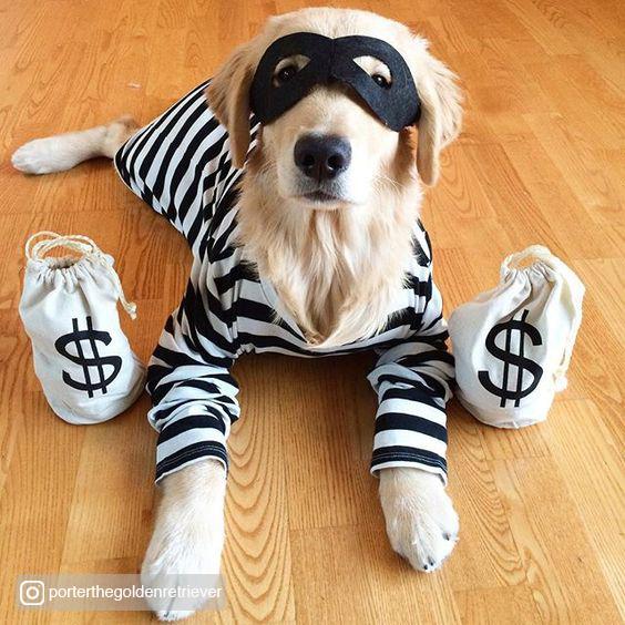 Credited Dog Halloween Costume 12