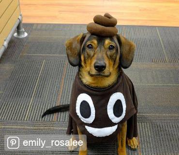 Credited Dog Halloween Costume 15