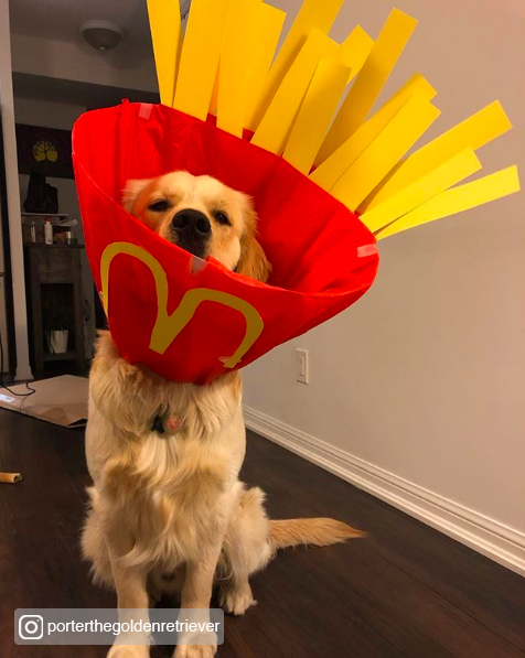 15 Adorable and Easy Dog Halloween Costumes
