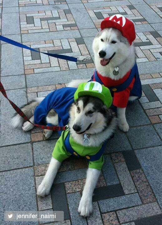 Credited Dog Halloween Costume 6