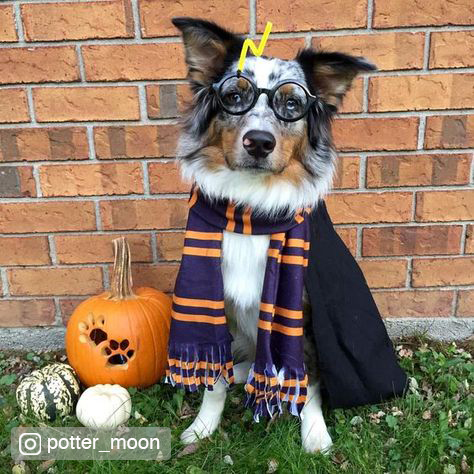 Credited Dog Halloween Costume 7