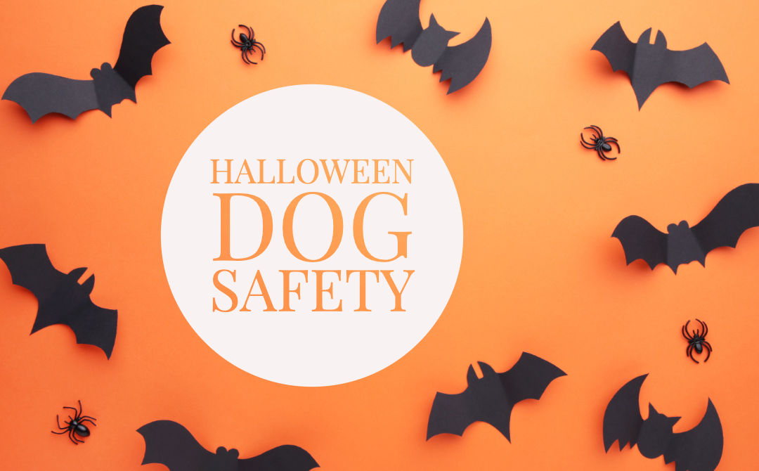 Pet Safety on Halloween